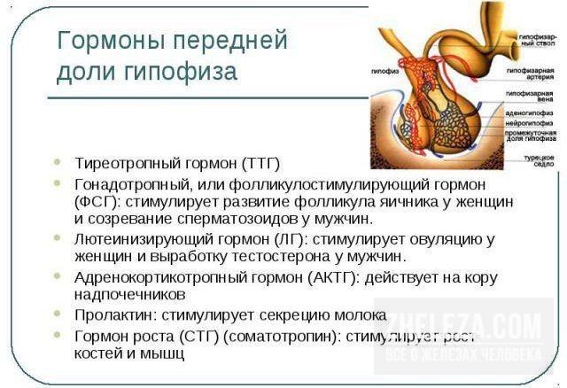 Анализ ТТГ