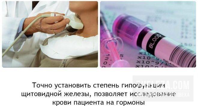 функция гормонов