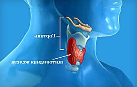 Основные методы диагностики заболеваний щитовидной железы