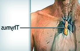 Рак вилочковой железы