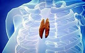 Вилочковая железа – основные заболевания
